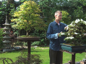 Image of bonsai grower pruning his small trees in the garden