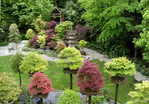 Aerial view of a collection of miniature bonsai trees, shown growing outside on individual plinths