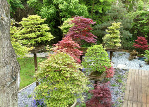 View of trees growing by a decking pathway, above herbaceous plants