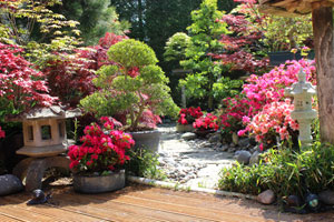 Photo of a Japanese garden, with stone lanterns, maples and pots of azaleas
