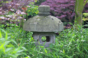 Image of a large Misaki lantern surrounded by dwarf pygmy bamboo shoots