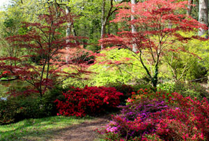 Gardens with anese maples garden ftempo for Garden design with japanese maple