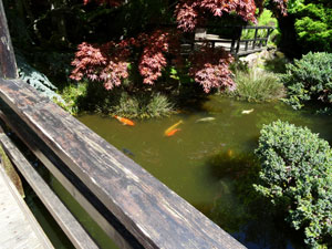 View of pond from wooden bridge