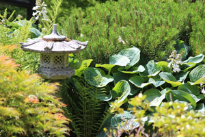 Image of hostas and dwarf mugo pines, growing by granite Rankei lantern