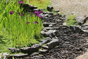 Image of purple iris flowers growing alongside bed of grey paddlestones and pebbles