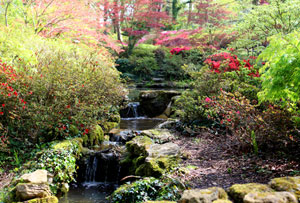 Further view of the waterfall, with azaleas and Japanese maples in the background