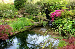 Picture of a large pond with cascade of water and oriental planting