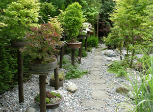 Image of pathway leading past a display of bonsai trees on wooden plinths