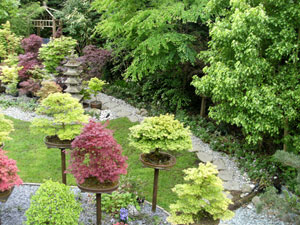 Further image of bonsai collection on stands in the garden