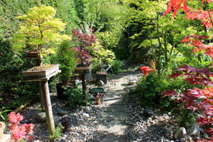 Picture of a stepping stone pathway, passing by a collection of beautiful bonsai trees and Japanese maples