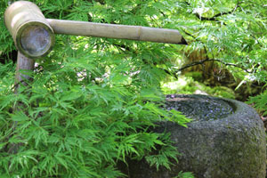 Image of granite basin water feature, with bamboo spout and green dissected maple